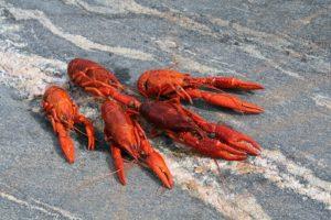 Krill olaj kúrák tartása évente 2-3 alkalommal